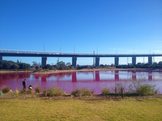 melbourne pink lake australia