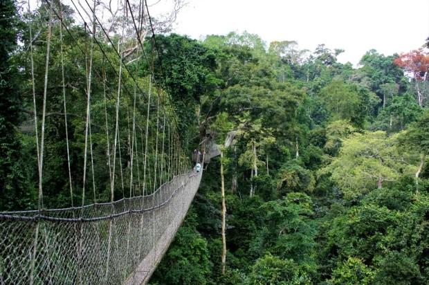 Kakum National Park Ghana Treetops