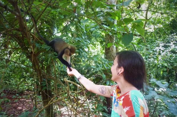 boabeng fiema monkey sanctuary ghana mona monkey tabby farrar