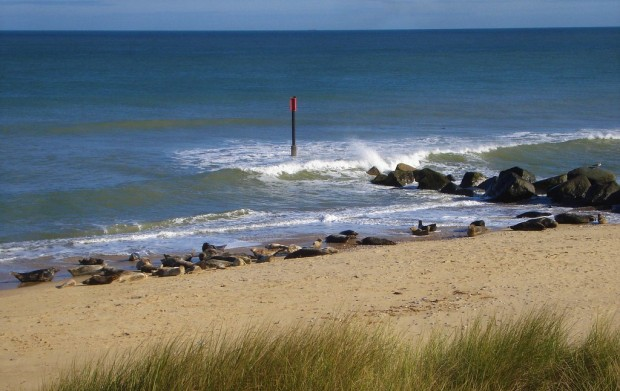 horsey seals norfolk