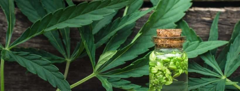 cbd-oil-leaves