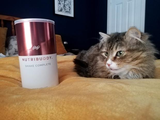 nutribuddy shake complete george cat
