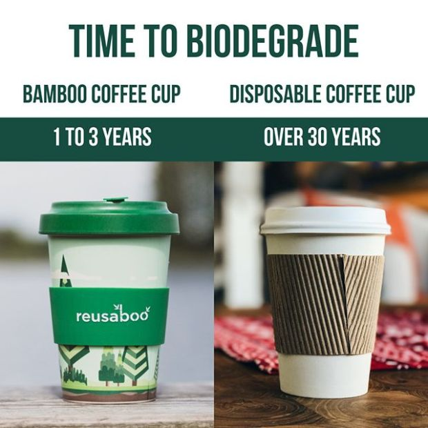 How long does a bamboo cup take to biodegrade - 1 to 3 years