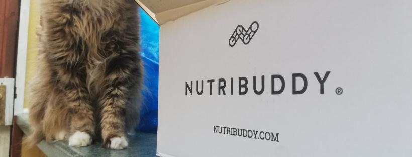 nutribuddy box fluffy cat